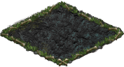 blood fern_plant_2X2.png