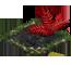 blood fern_plant_icon_big.png
