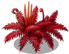 blood fern_plant_Layer2.png