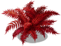 blood fern_plant_Layer3.png