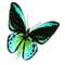 butterfly_workshop_02_orange_icon.png