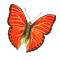 butterfly_workshop_03_red_icon.png