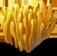 coralmushroom_plant_Layer1.png