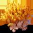 coralmushroom_plant_Layer2.png