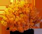 coralmushroom_plant_Layer3.png