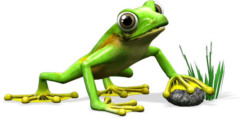 frog_stable_orange_marketing.png
