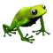 icon_breeding_meadow_frog_00.png