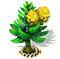 norfolkpine_upgrade_1.png