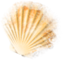 shell_01_missed.png