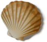shell_01_rewarded.png