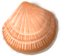 shell_02.png