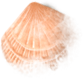 shell_02_missed.png