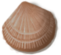 shell_02_rewarded.png