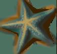 starfish_01_rewarded.png
