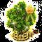 tuliptree_upgrade_2.png